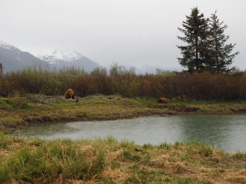 Grizzly spotkany w strzeżonym rezerwacie :)